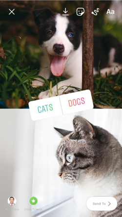 Example J.1 Cats or Dogs