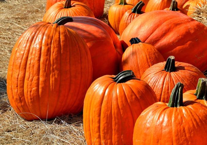 Real_Estate_Marketing_Halloween.jpg